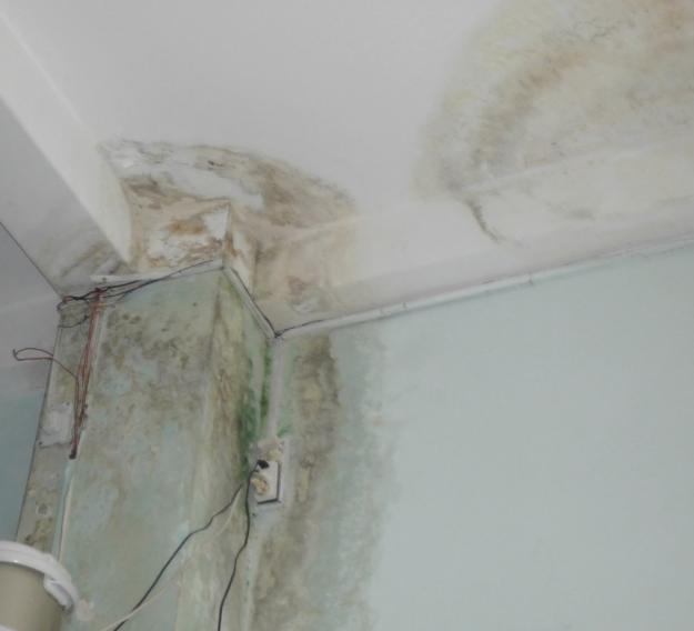 Cách xử lý tường nhà bị ẩm mốc bằng giấy dán tường